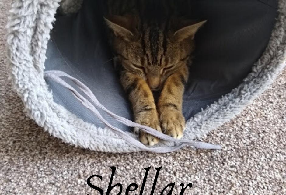 Shellar The Cat